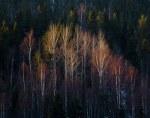 Autumn Forest in Sweden