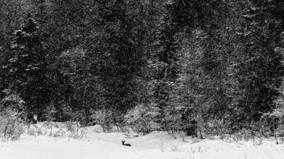 Deer in snow landscape